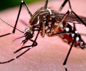 Virus West Nile e Usutu
